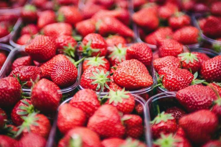 virginia beach event pungo strawberry festival