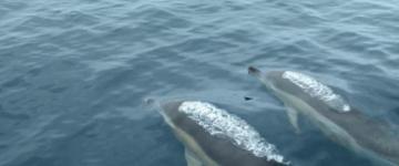 Virginia Beach dolphins