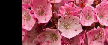 Virginia Beach flowers